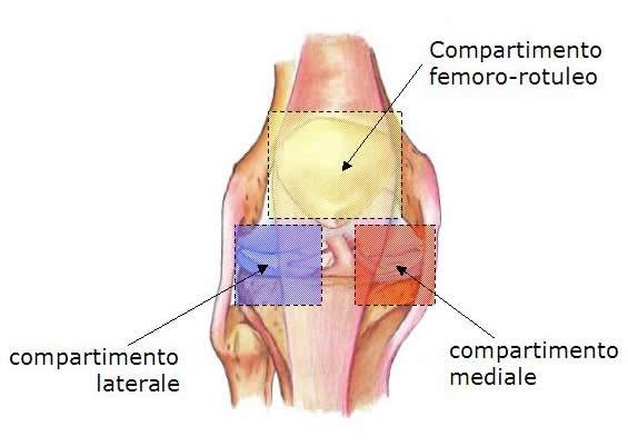 compartimenti del ginocchio