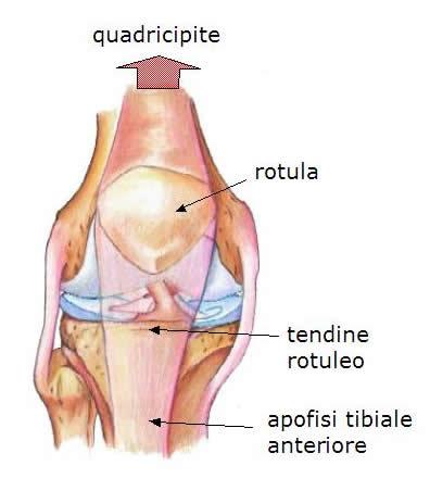 Tendinite/tendinosi rotulea: cause, diagnosi e trattamento